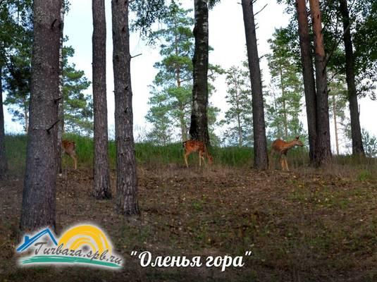 Загородный клуб «Оленья гора»